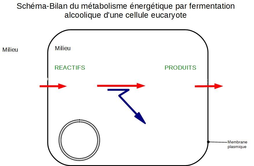 2nde_th01_02_c-metabolismecellulaire-schemasbilan2-muet